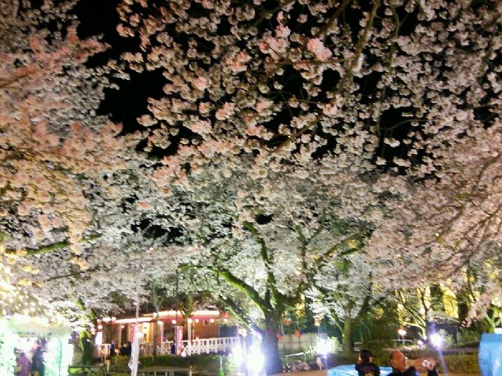 夜桜は必見 御殿場高原ホテル