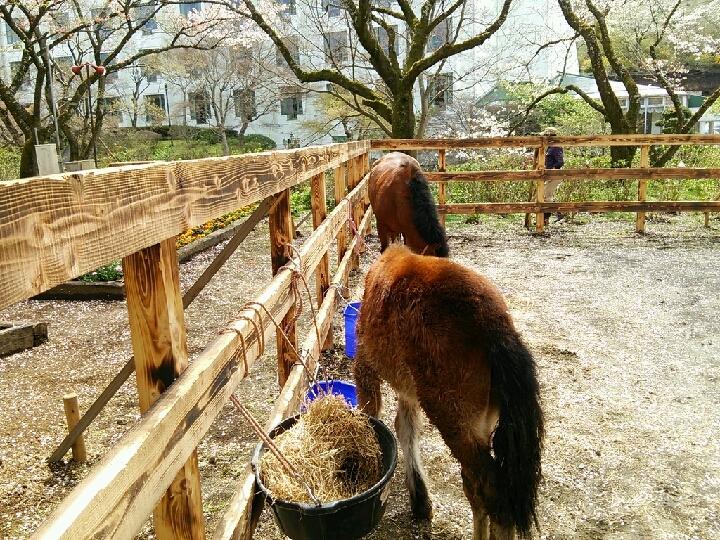 敷地内には馬が飼われています