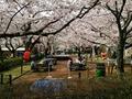 桜並木は日帰り客にも人気