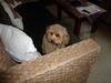 看板犬 (UMI:うみ)
