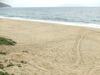 浜をよーく見ると・・・