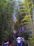 竹林の小径もすぐ