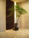 1Fロビーの観葉植物