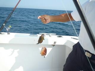 クルーザーで海釣り体験