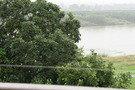 川沿いの木