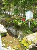 裏山から続く小川