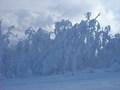 イゾラゲレンデで見た樹氷