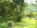 九頭龍の森のコテージ