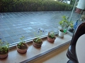 ラウンジの素朴な鉢植えの花