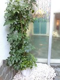 露天の観葉植物