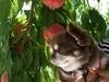 松島屋旅館のフルーツ狩りパック