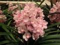 美しいランの花♪