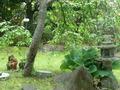 レストラン外のミニ庭園
