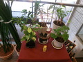 レストラン入口の観葉植物