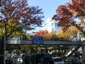 紅葉の美しい秋の表参道