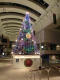 クイーンズスクエアの2012年のクリスマスツリー