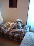 愛犬用ベッド