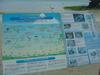 海の生き物を紹介