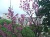 桜も咲いていました(2月3日)