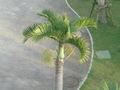 庭園のやしの木