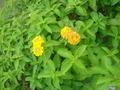 庭で咲いていた花