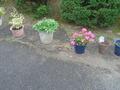 花々が咲いていてきれいな庭です