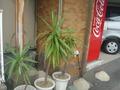 観葉植物がたくさん