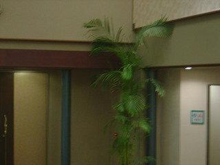 写真クチコミ:観葉植物
