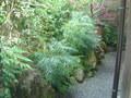 渡月亭碧川閣の庭