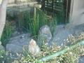 ちょっとした庭園