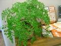癒される木