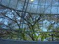 飲食ドームから見た桜