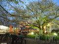 桜の木の下のテーブルとイス