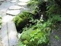 小道の小川