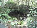 敷地内の風流な池