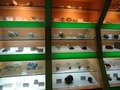 1F展示室 鉱物・岩石の展示標本