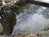 お庭の池の鯉