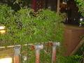 シンボルの竹
