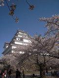 鶴ヶ城の桜はとてもきれいでした。