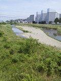 写真クチコミ:河川敷