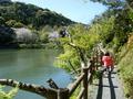 みどり池と歩道