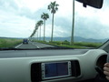 椰子の木道を通って