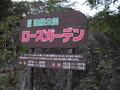 強羅公園の中のバラ園