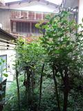 ひのき風呂と本館の通路の脇の木々