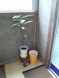 鉢植えとゴミ箱