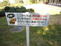 狸の遊び場