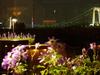レストラン テラスオンザベイからの夜景