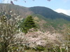 冨士屋ホテル・日本庭園から薄桃色の眺め