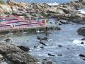 露天風呂から見下ろす「太海海釣りセンター」