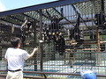 チンパンジーのおやつの時間(フェニックス自然動物園)